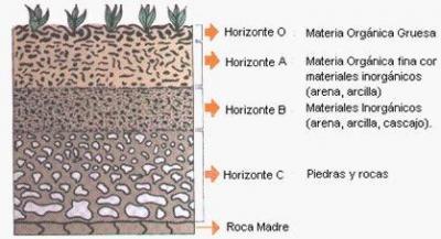 El perfil del suelo rocasminerales for Perfil del suelo wikipedia