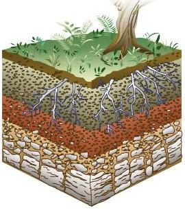 Dibuja e identifica el perfil del suelo rocasminerales for El suelo y sus capas